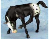 Breyer Scratching Foal Black Blanket Appaloosa is in your collection!