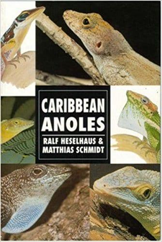 Caribbean Anoles (Herpetology series)