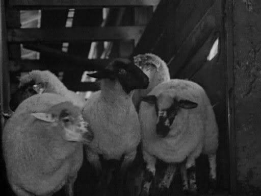 Killer of Sheep                                  (1978)
