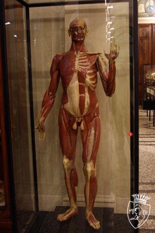 Museo di Anatomia Umana \\\