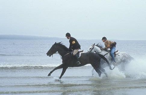 tips voor paardenliefhebbers dit maakt je vrijdag avond