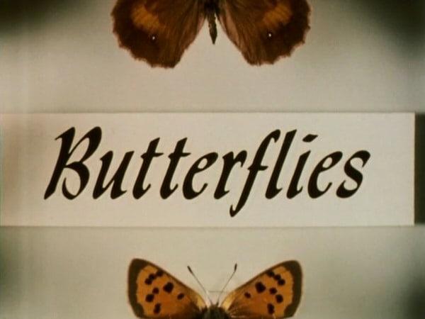 Butterflies                                  (1978-1983)